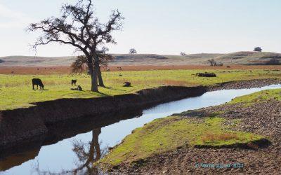 Newsom Administration – Progressive on Water?
